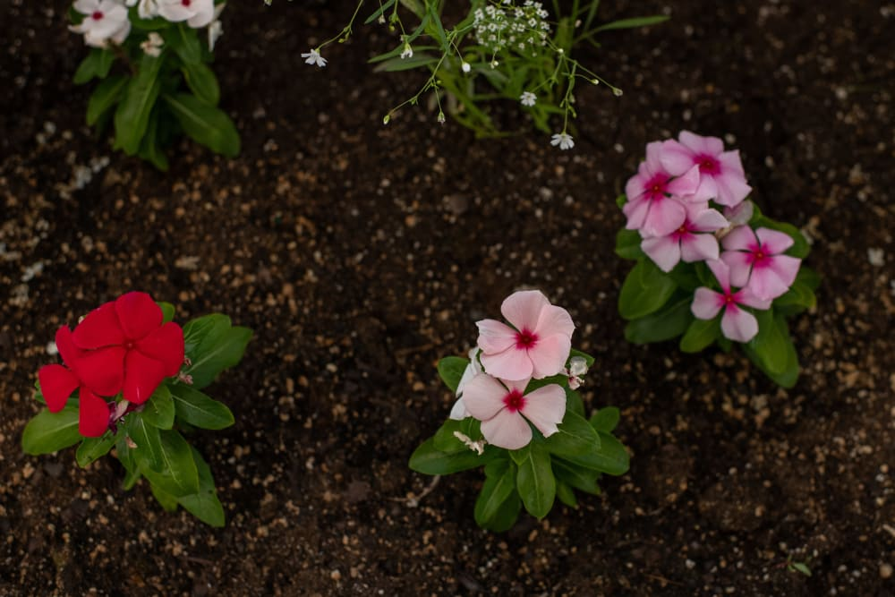 Flower garden at Elk Meadows Assisted Living and Memory Care in Oakley, Utah