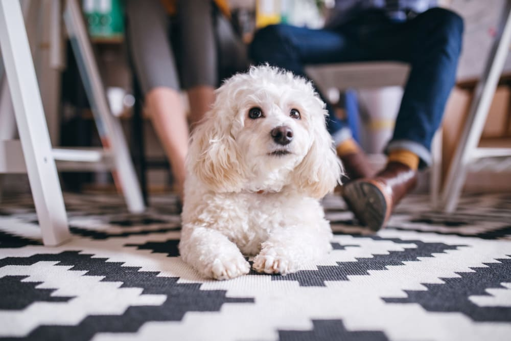 Happy dog at River Commons Senior Living in Redding, California