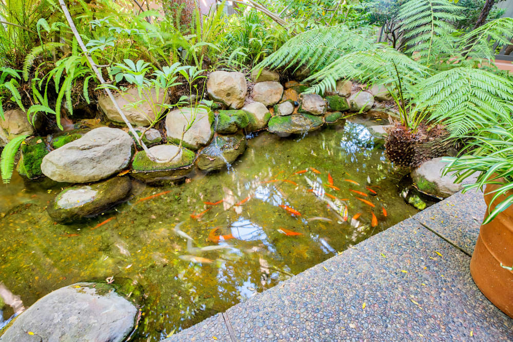 Koi pond at Casa Granada in Los Angeles, California