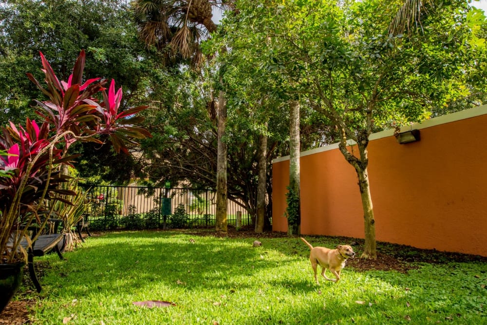 Dog park onsite at The Pearl in Ft Lauderdale, Florida