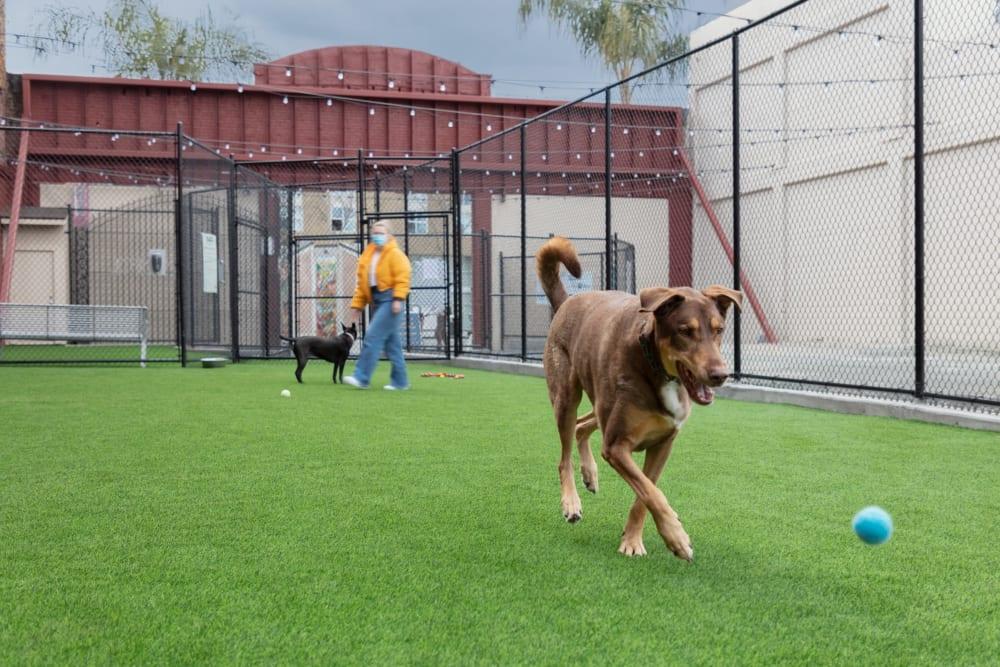 SoFa Dog Park play area near Sparq