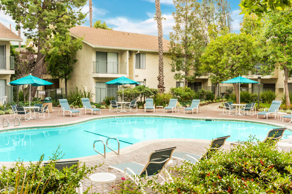 Swimming pool surrounded by chaise lounge chairs on a beautiful day at Village Pointe in Northridge, California