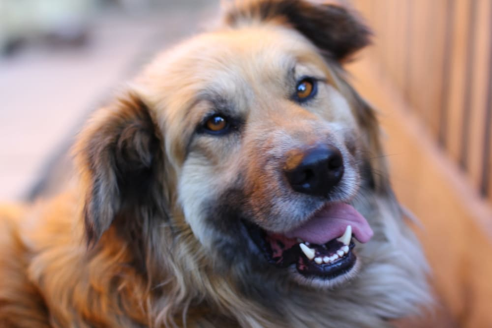 Our pet-friendly community welcomes both dogs and cats at Fields on 15th Apartment Homes in Longmont, Colorado
