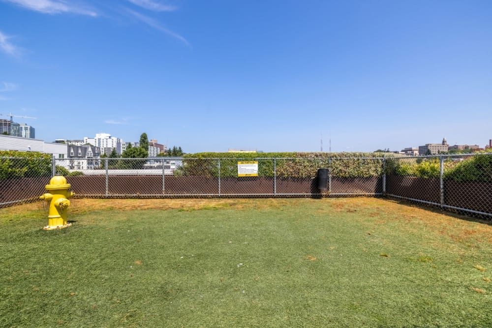 Dog park on rooftop at Anthem on 12th in Seattle, Washington