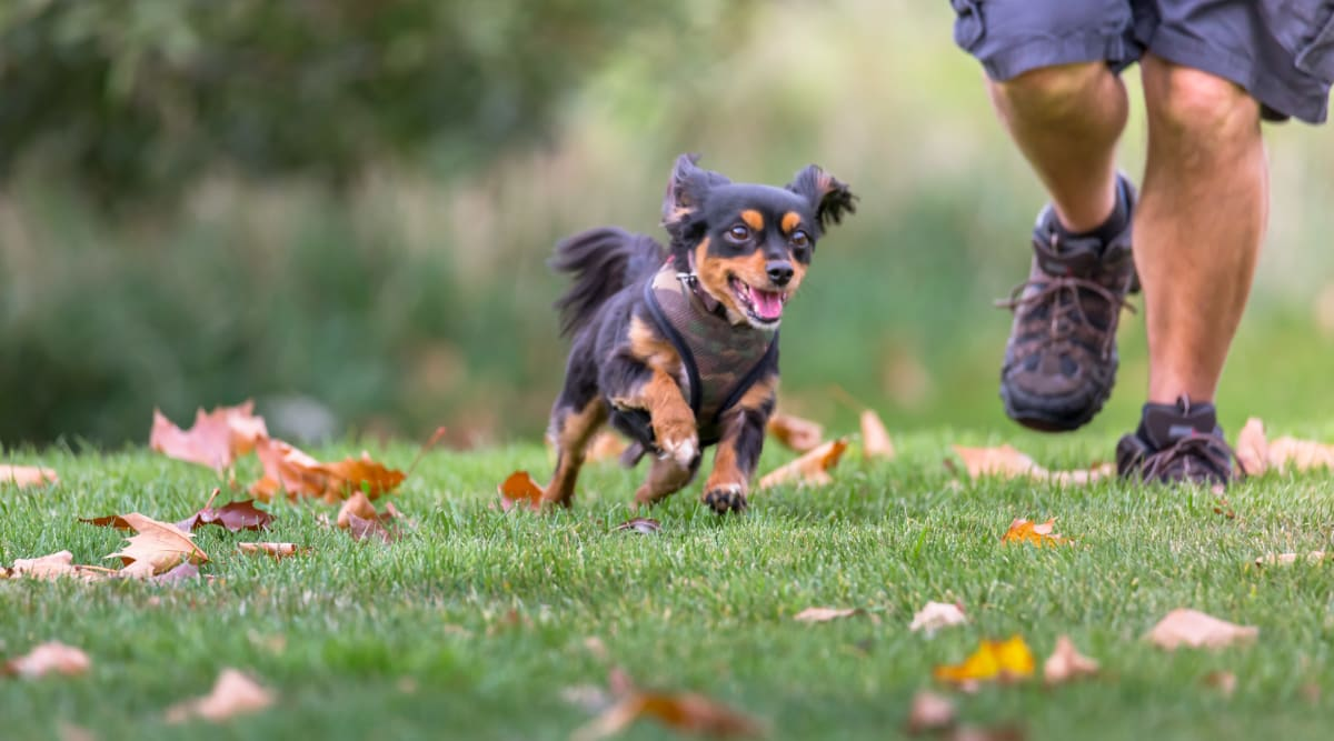 Happy dog running outside at Oakwood Apartments in West Carrollton, Ohio