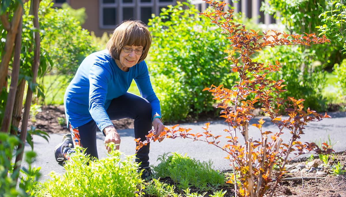 senior woman planting