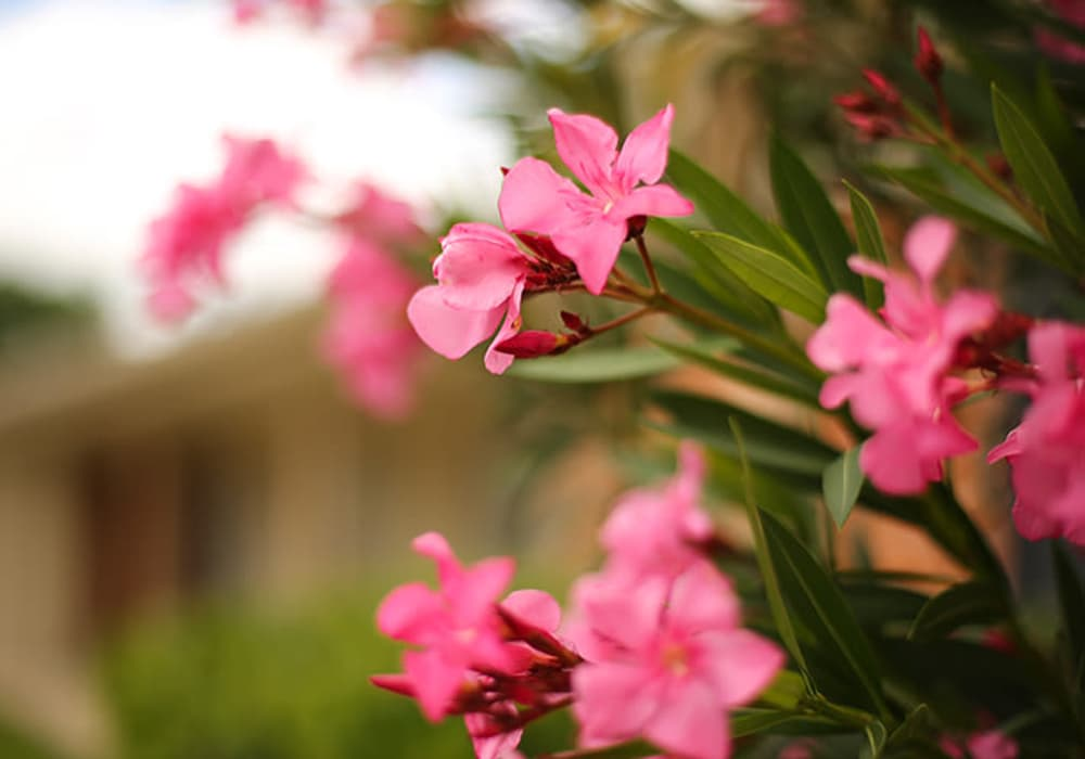 Flowers at Willow Oaks Apartments in Bryan, Texas