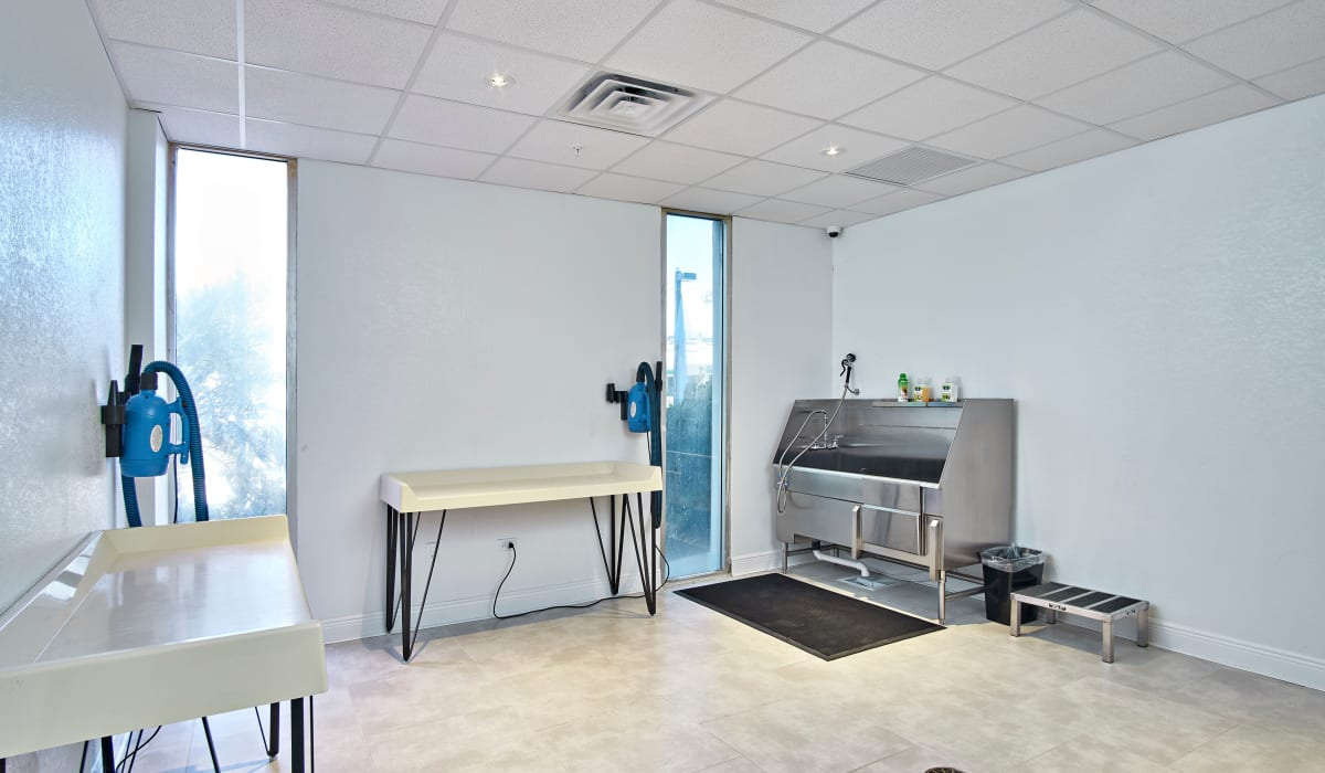 Indoor dog grooming space at The Wayland in St Petersburg, Florida