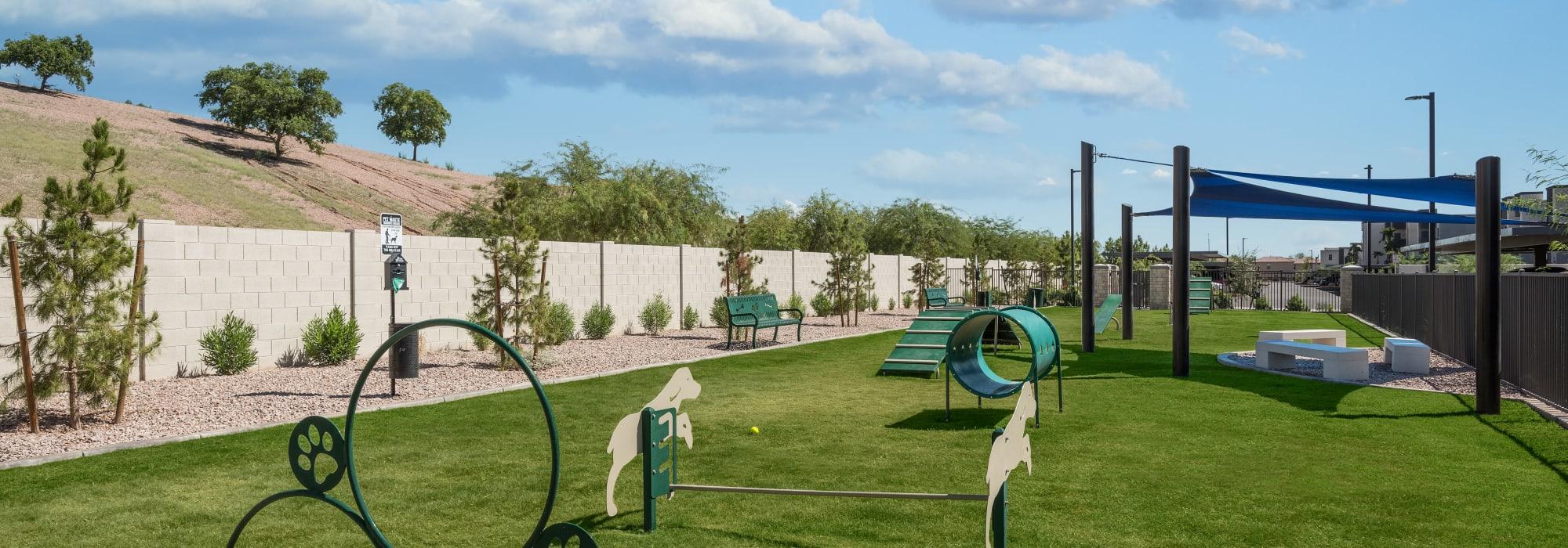 Dog park at Aviva in Mesa, Arizona