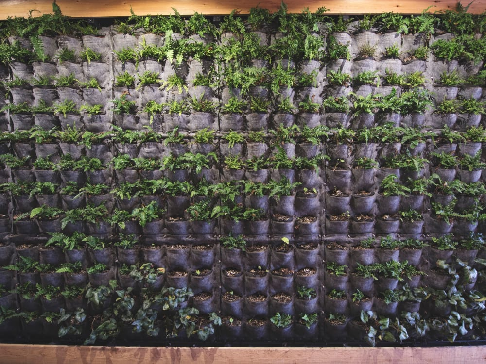 Plant walls providing additional fresh air to common areas at Brooklyn Yard in Portland, Oregon