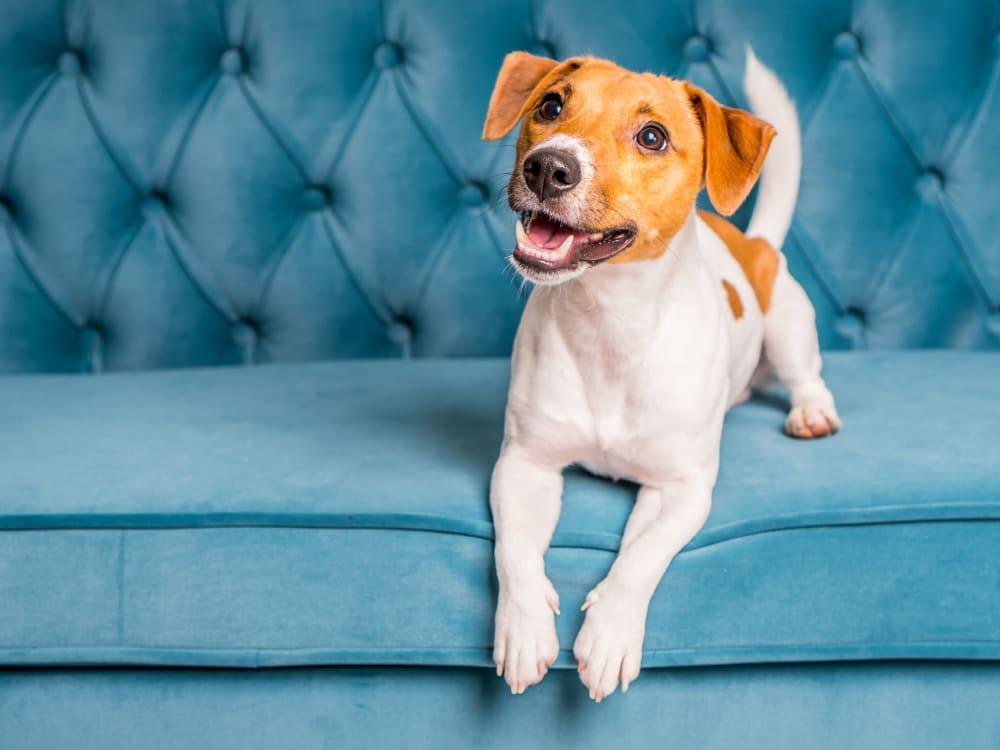Happy dog at The Phoenix in Brighton, Colorado