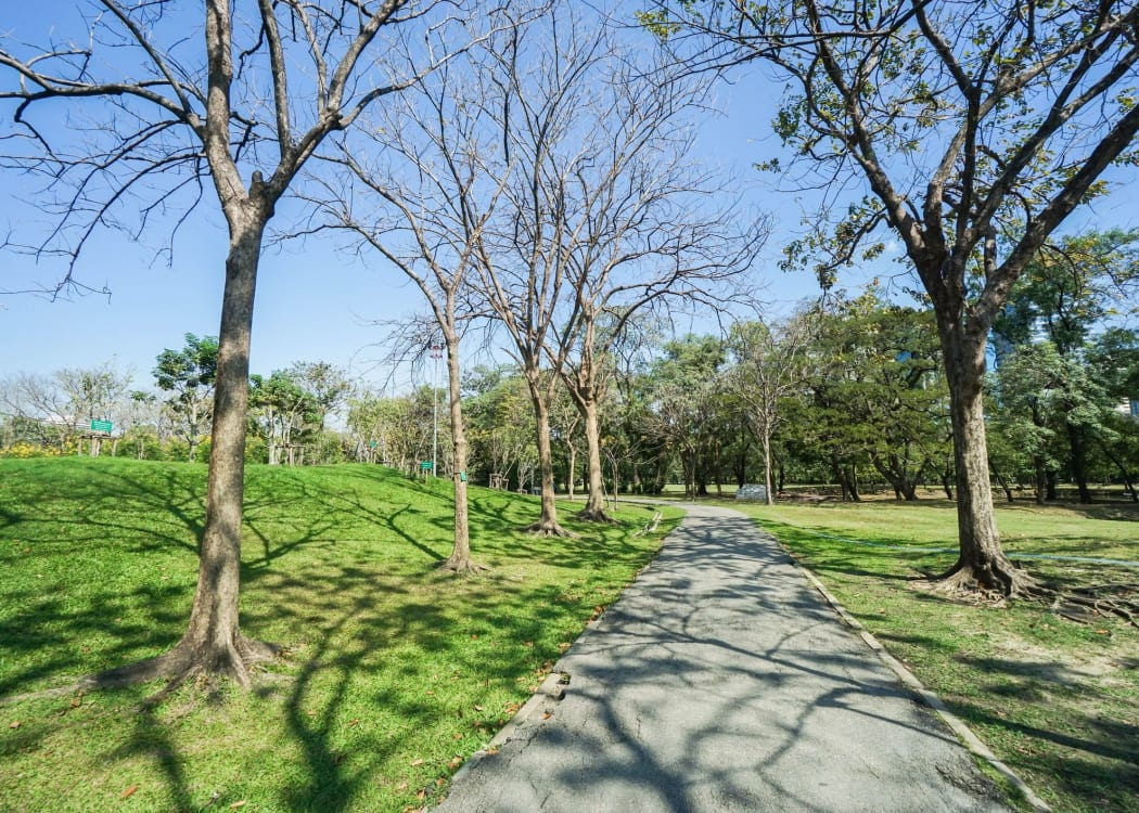 Trees of Gainesville is near outdoor activities