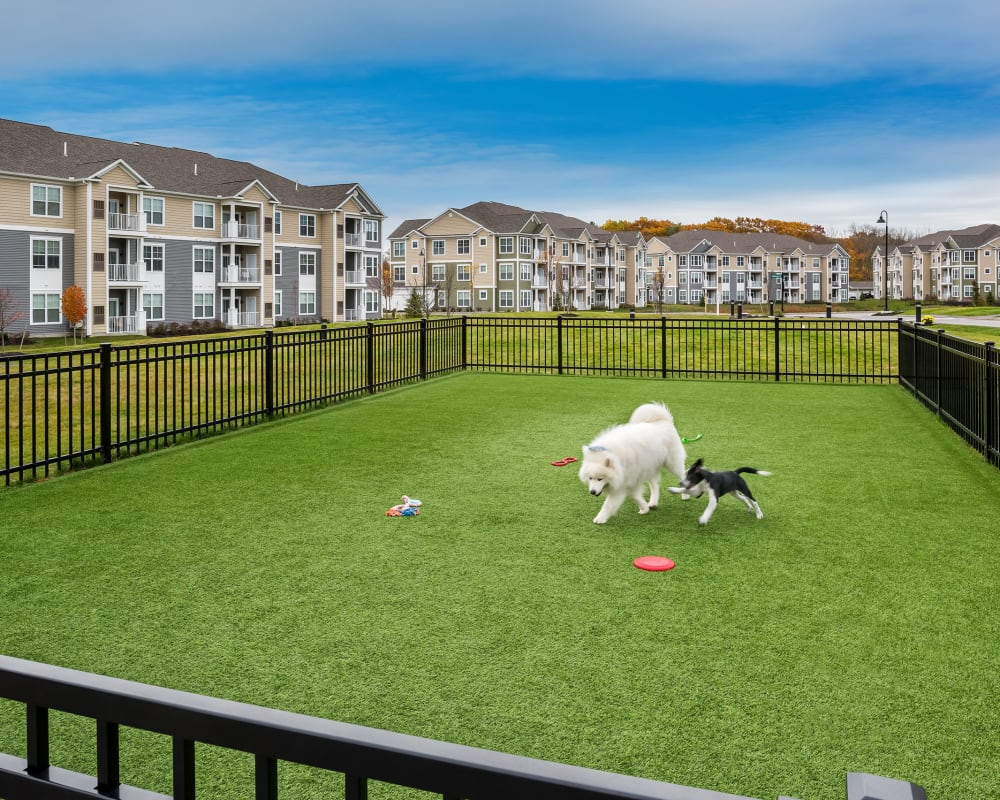 Dog park at The Beacon at Gateway in Scarborough, Maine