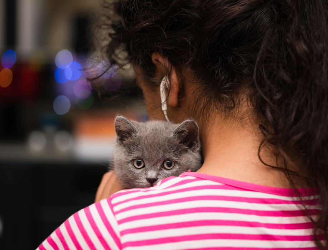 Young girl with kitten at Stony Brook Commons in Roslindale, Massachusetts