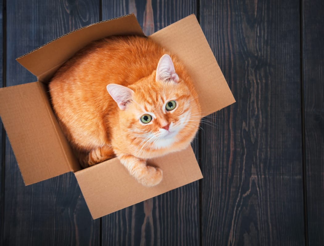 Cat in a box in a unit at The Fairways in Worcester, Massachusetts