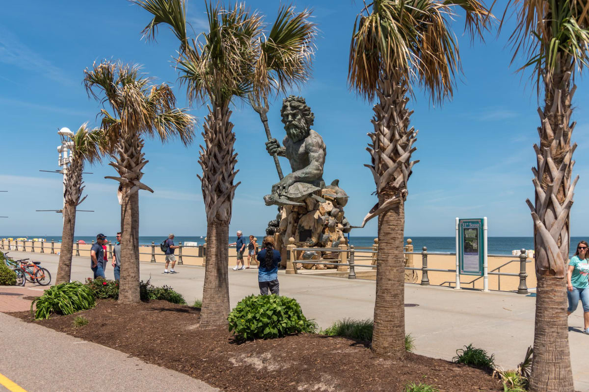 Palm tree by the beach in Virginia Beach, Virginia near Indigo 19