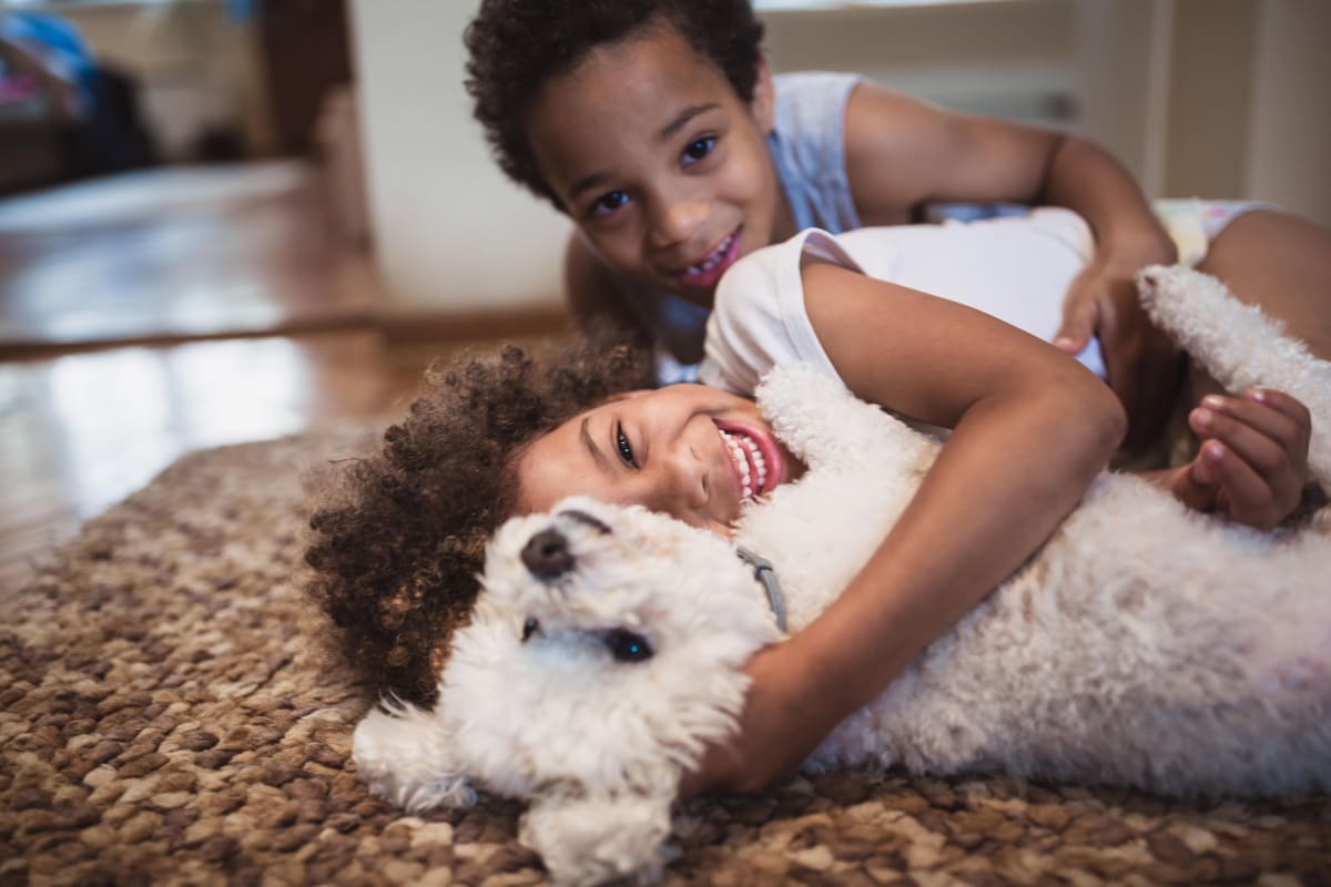 View our pet policy at 900 Dwell in Stockbridge, Georgia