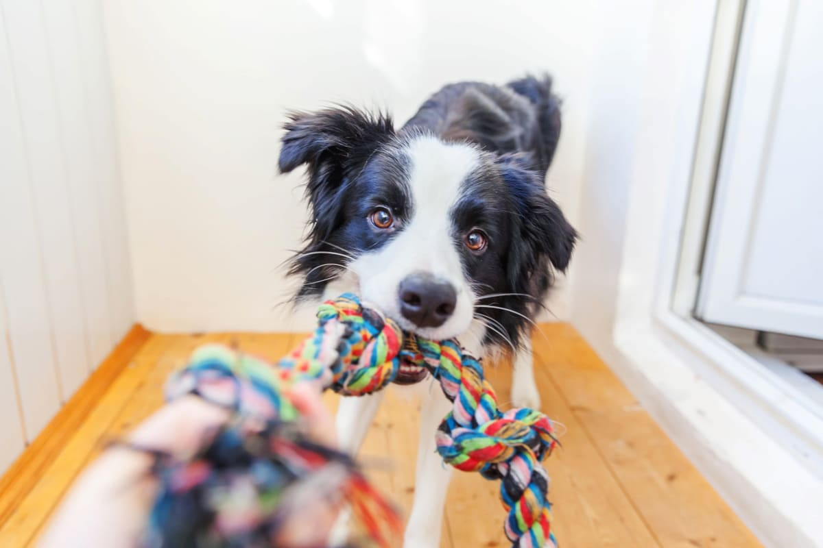 View our pet policy at Courtney Isles in Yulee, Florida