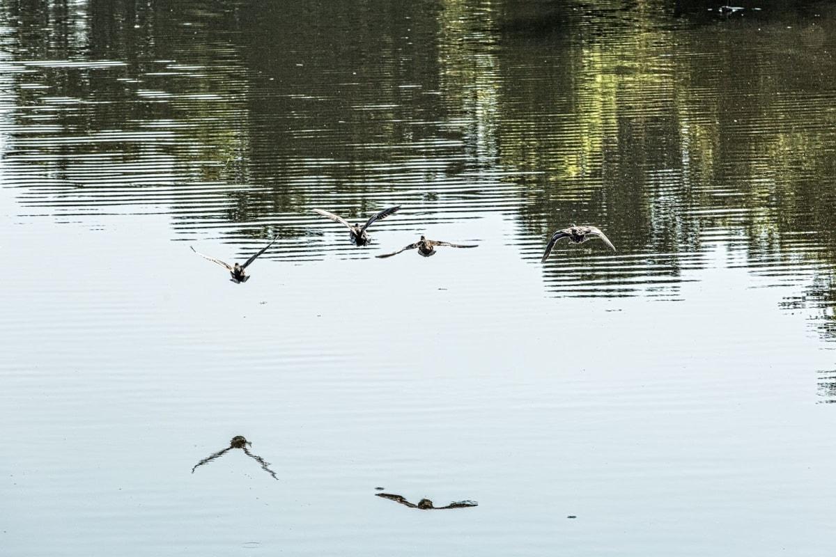Pond at The Views at Laurel Lakes in Laurel, Maryland