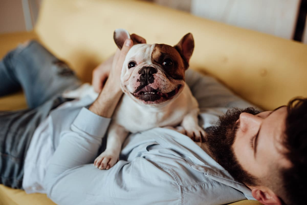 Resident and his pup relaxing on the couch in their apartment at Solera at City Centre in Palm Beach Gardens, Florida