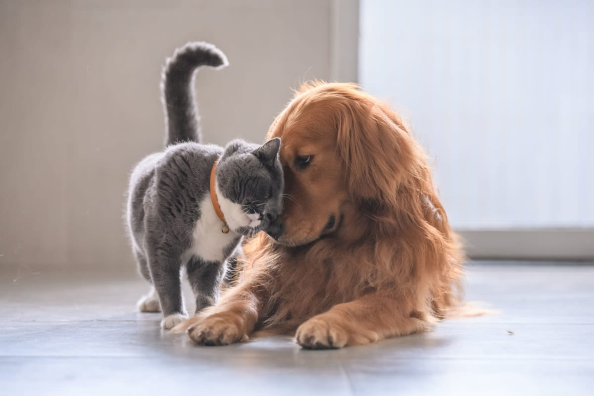 Resident dog and cat giving each other some love in their new home at Solera at City Centre in Palm Beach Gardens, Florida