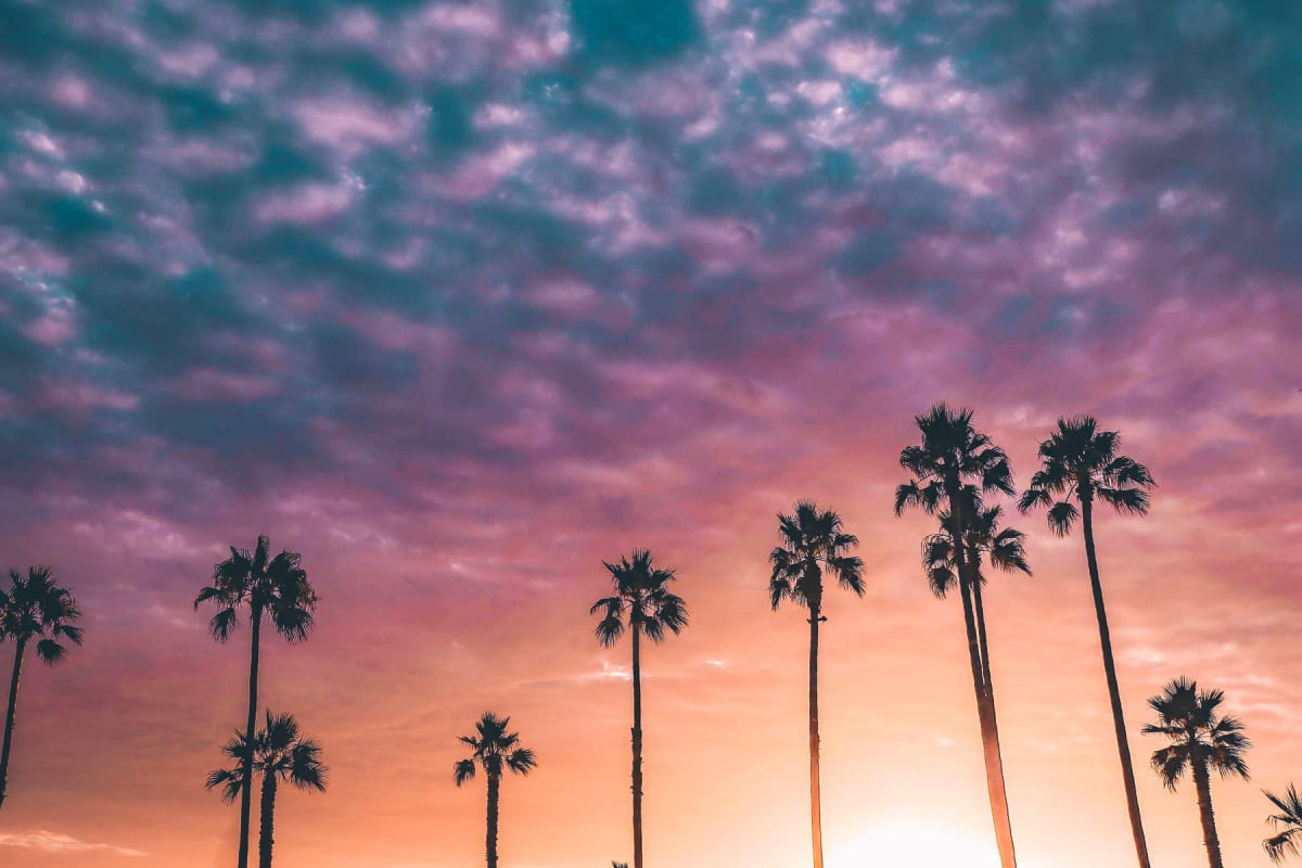 Palm trees against a gorgeous sunset sky near West Park Village in Los Angeles, California