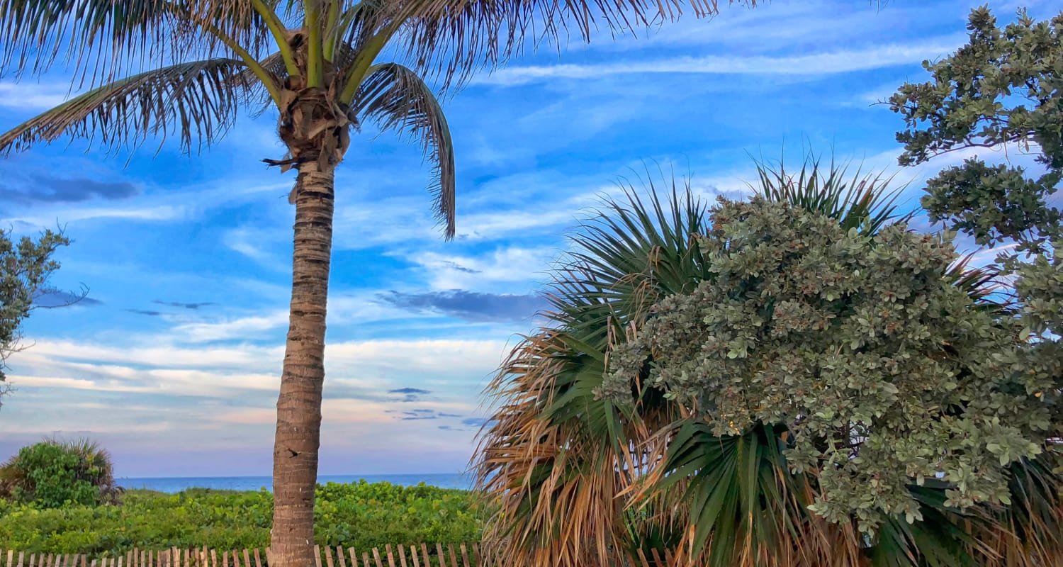 Palm trees against a beautiful sky near Verse at Royal Palm Beach in Royal Palm Beach, Florida