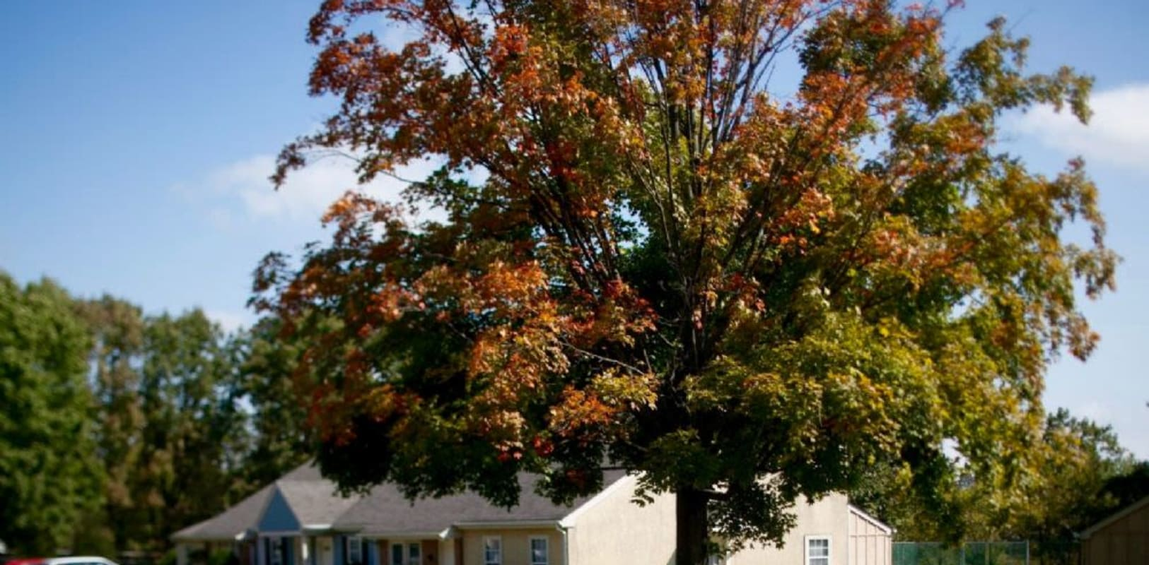 Beautiful large tree with fall colors near Oley Meadows in Oley, Pennsylvania