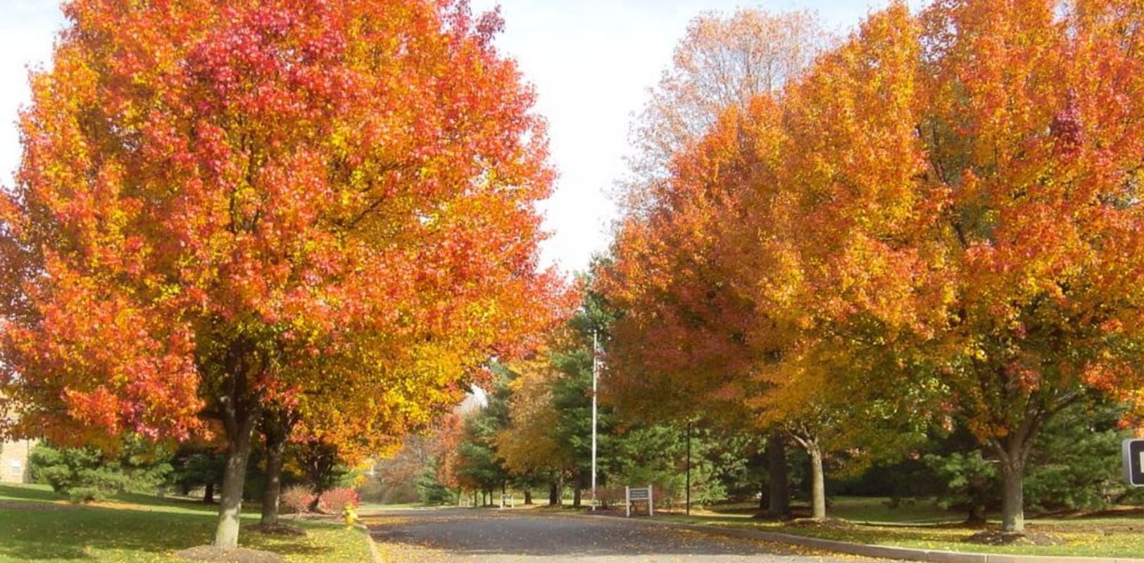 Huge lovely fall colored trees at Sharon Arms Apartments in Robbinsville, New Jersey