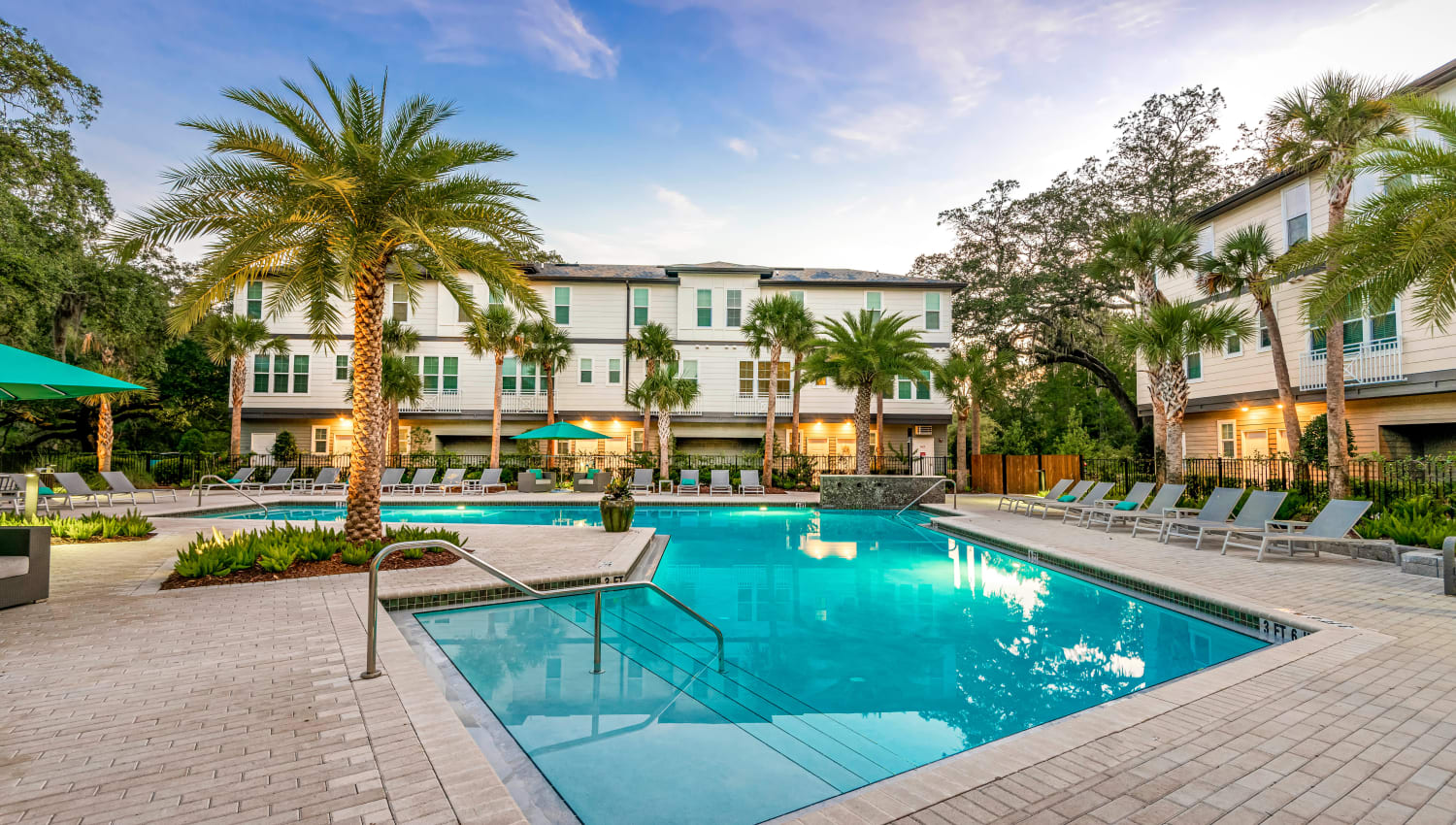 Palm trees around the pool on a gorgeous day at Canopy at Citrus Park in Tampa, Florida