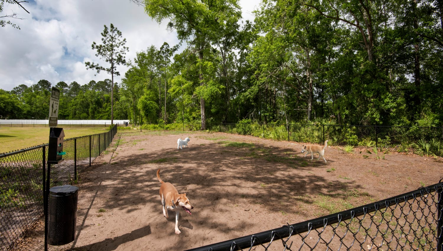 Onsite dog park at The Enclave in Brunswick, Georgia