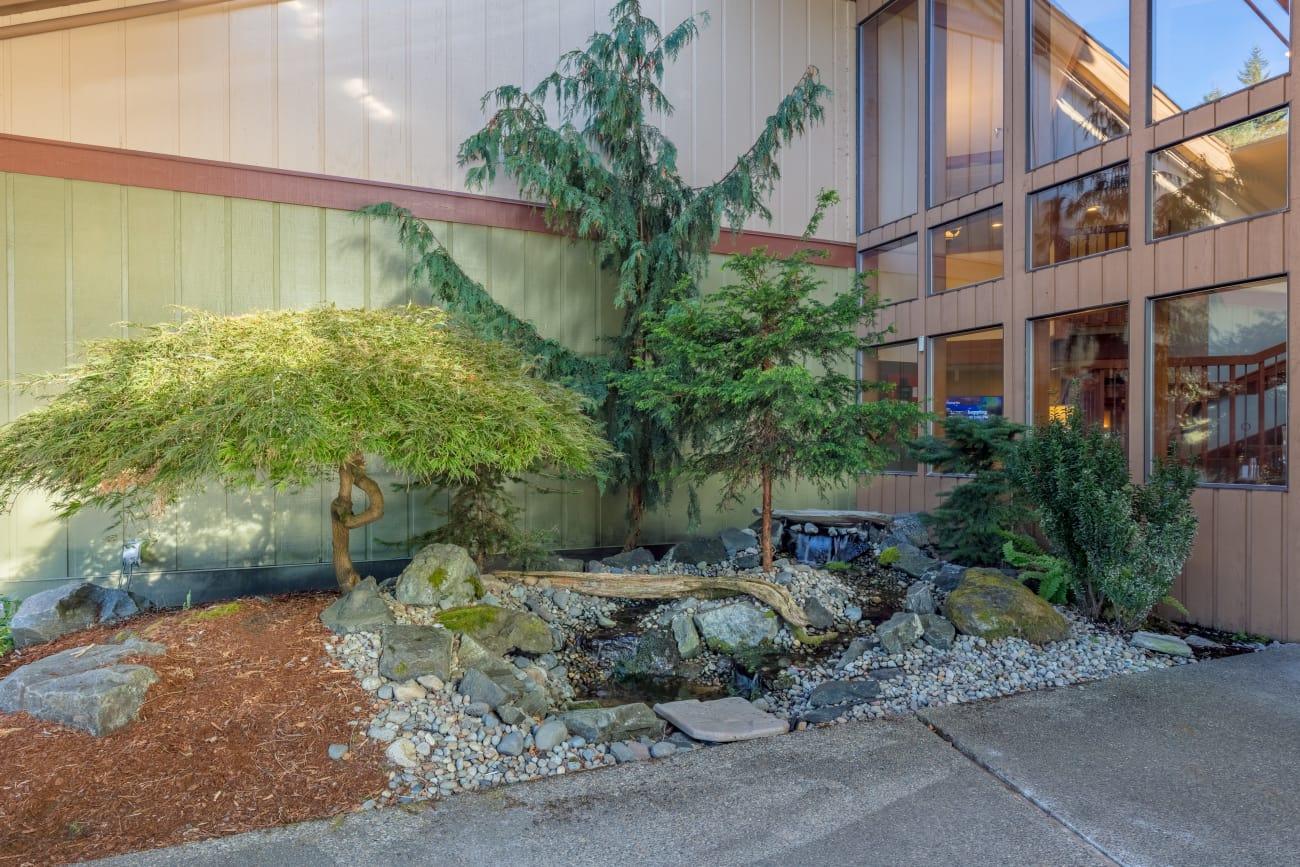Bonsai trees at The Firs in Olympia, Washington