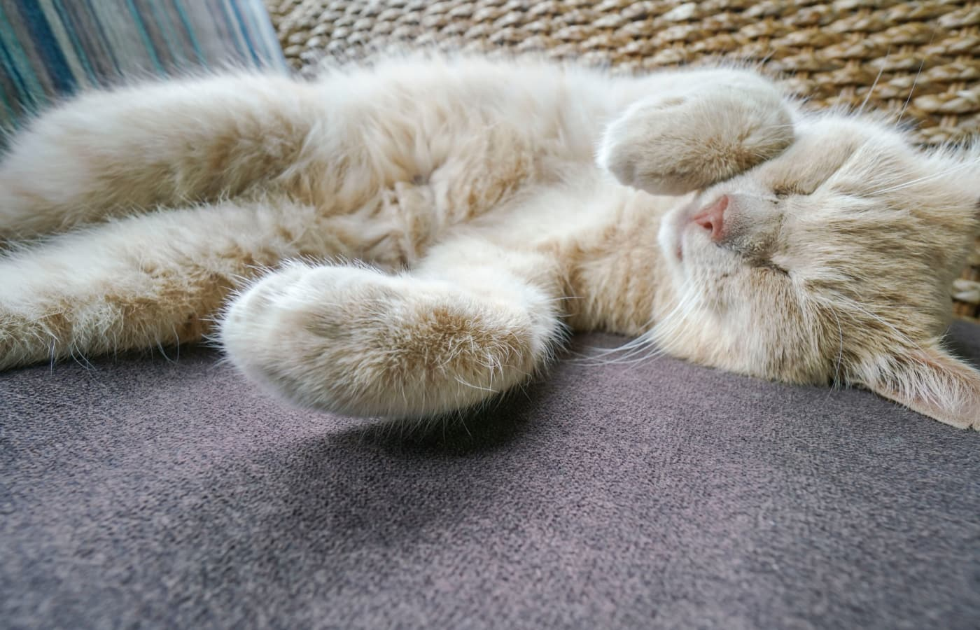 Cat resting comfortably at Value Pet Clinic - Shoreline in Shoreline, WA