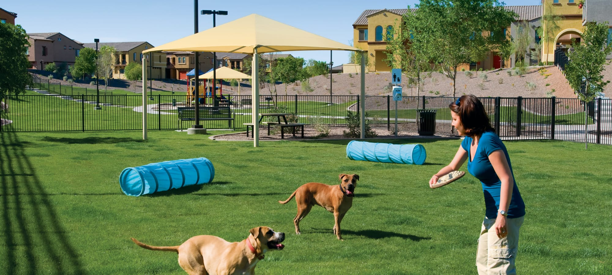 Community dog park at Ravenwood Heights in Tempe, Arizona