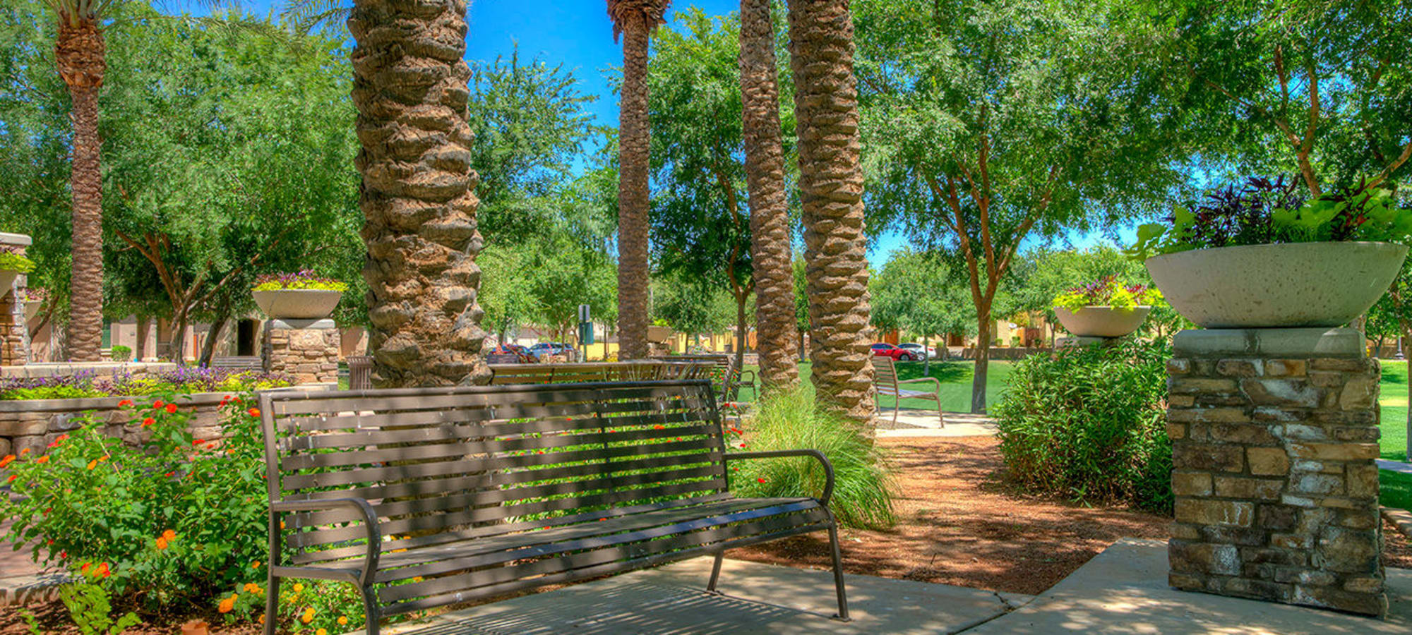 Park bench under large palm trees at BB Living at Higley Park in Gilbert, Arizona