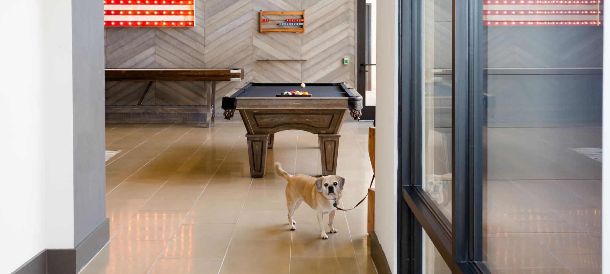 Resident's pet in the game room at Avant at Fashion Center in Chandler, Arizona