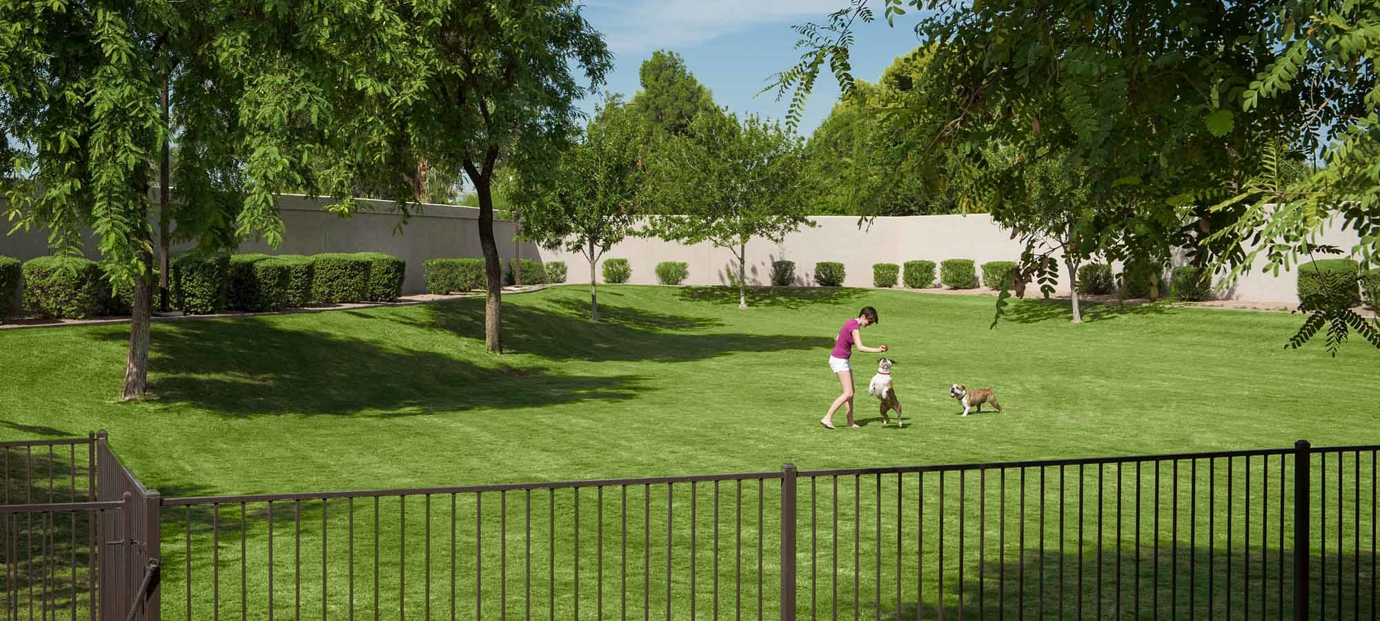 Spacious gated dog park at San Marbeya in Tempe, Arizona