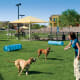 Tempe Pet Friendly Communities Photo