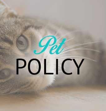 Information about our El Paso apartment community's pet policy