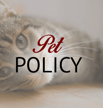 Our El Paso apartments are pet friendly