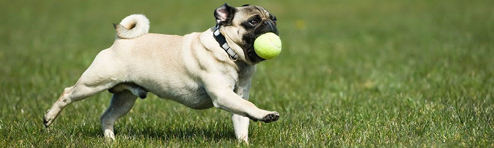 We welcome many types of pets at our Ridgeland apartments
