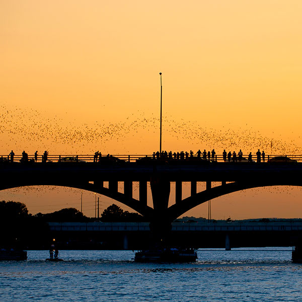 Austin is the place for bat enthusiasts.