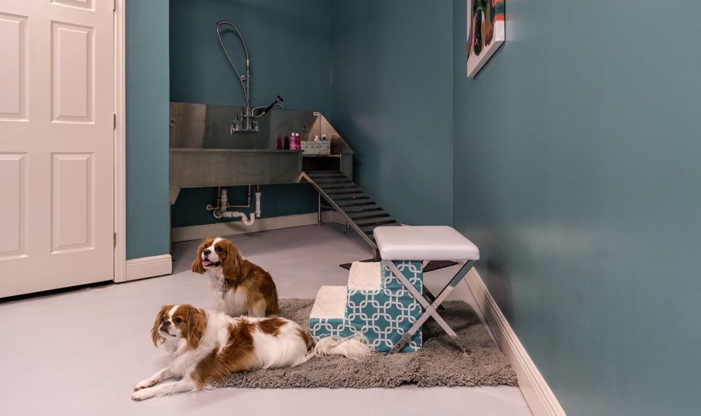 Pet spa at apartments in NC