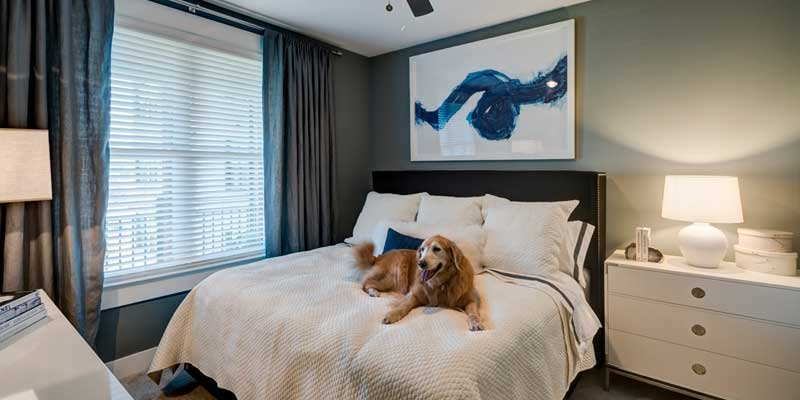 Berkshire Dilworth in Charlotte, North Carolina offers Pet Friendly Apartments