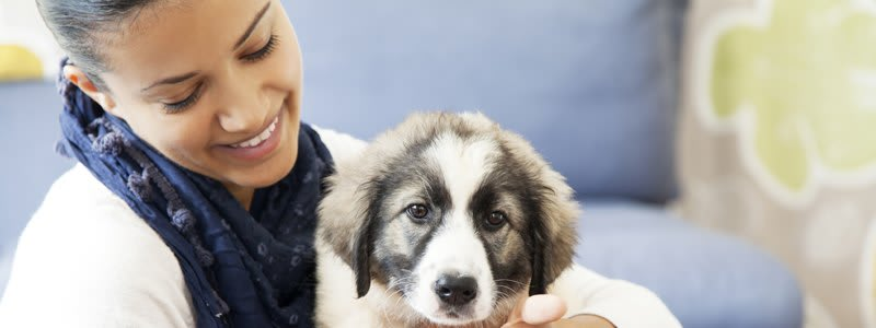 Pet friendly apartments in Tampa FL