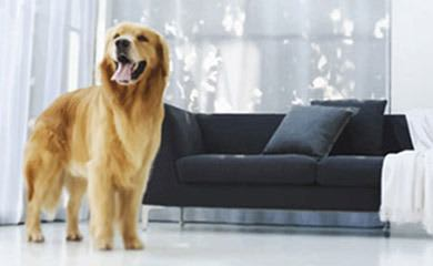 Pet friendly apartments in Tampa