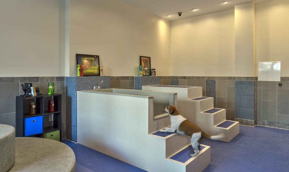 Pet spa at our luxury Durham apartments