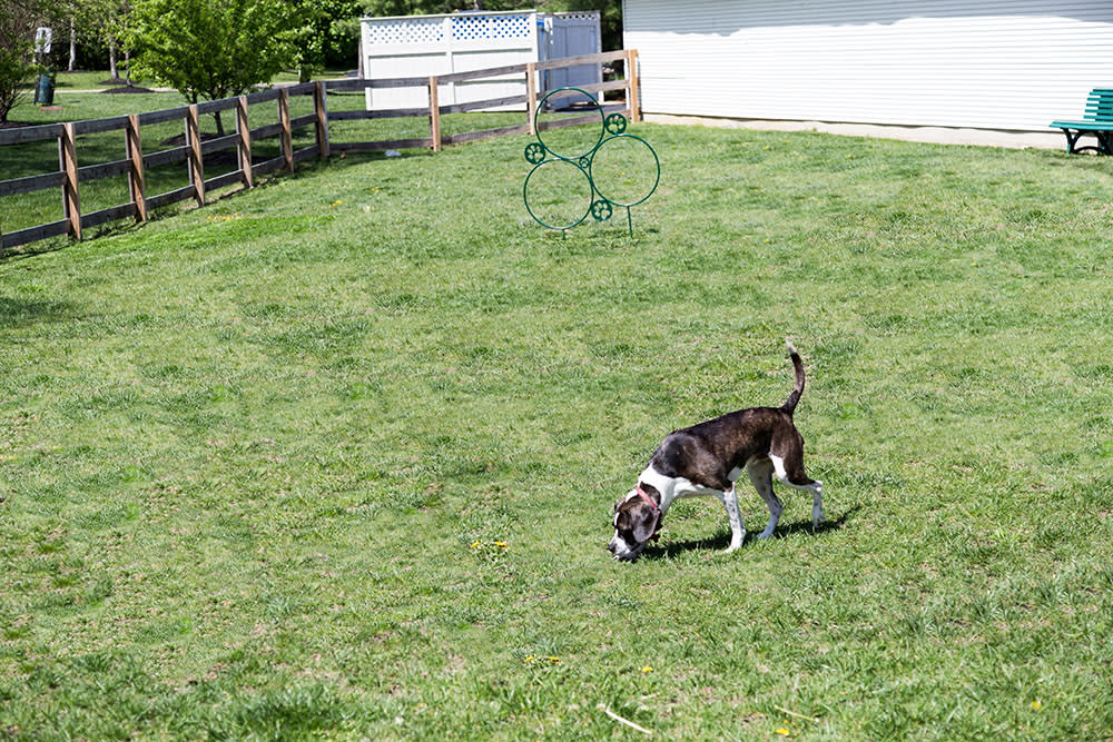 A dog park is onsite for your pet friend at The Preserve at Beckett Ridge