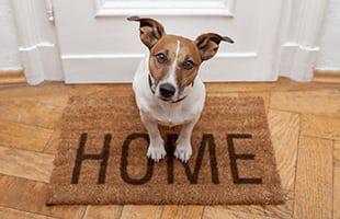 Pet friendly apartments for rent in Cincinnati, Ohio