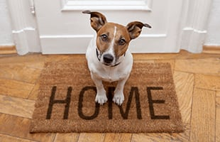 Pet friendly apartments in Dublin